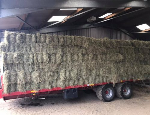 Soft Meadow Hay Available